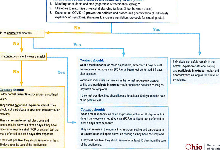 White background with diagram for COVID